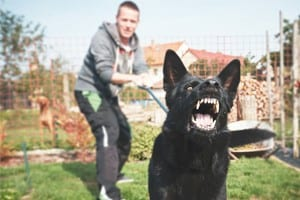 Black Dog Barking Stock Photo