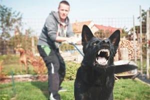 Black Dog Barking Stock Photo