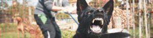 Alabama Dog Attack Lawyers